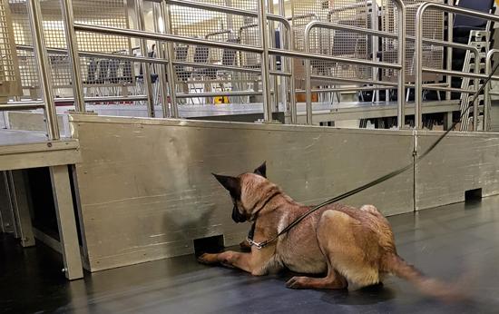 Sprengstoffspürhund in der Jahrhunderthalle