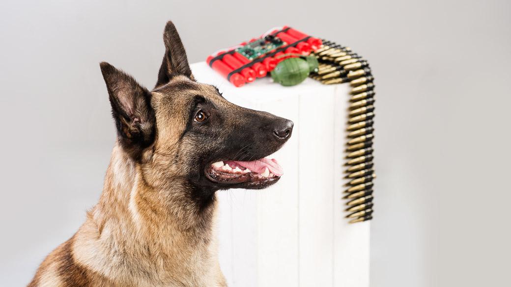 Studiofoto von Sprengstoffspürhund